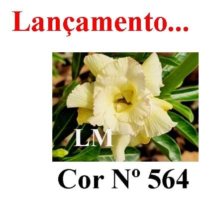 Cor Nº 564 LM Lançamento