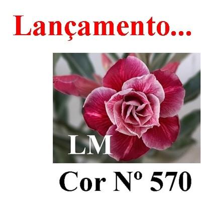Cor Nº 570 (2) LM Lançamento