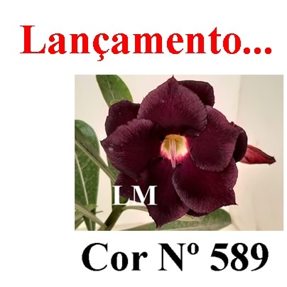 Cor Nº 589 LM Lançamento