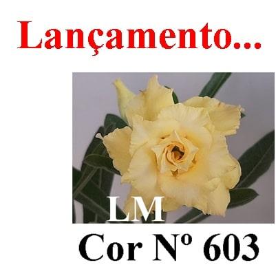 Cor Nº 603 LM Lançamento