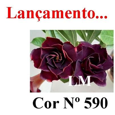 COR Nº 590 LM Lançamento