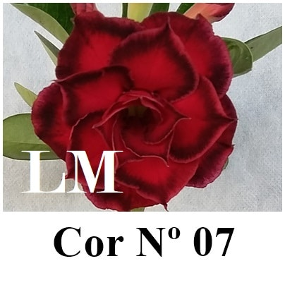Cor Nº 07 (3) LM