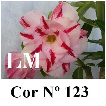 Cor Nº 123 (3) LM