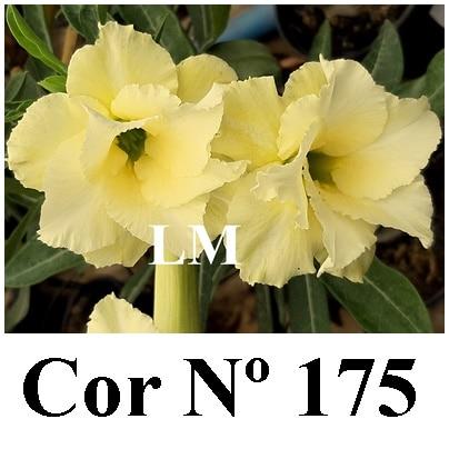 Cor Nº 175 (5) LM