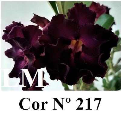 Cor Nº 217 (3) LM