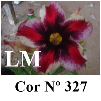 Cor Nº 327 LM