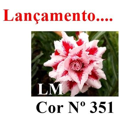 Cor Nº 351 LM lançamento