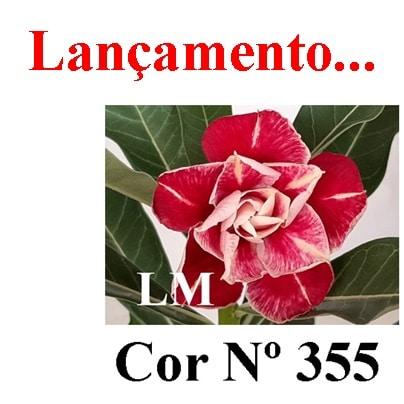 Cor Nº 355 (4) LM Lançamento
