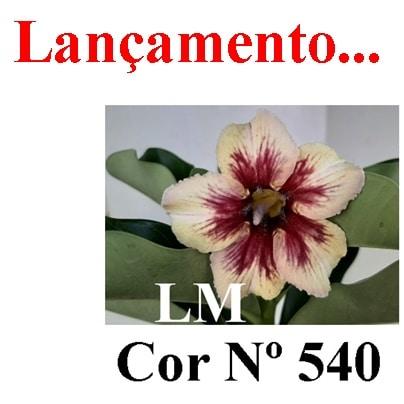 Cor Nº 540 (3) LM Lançamento