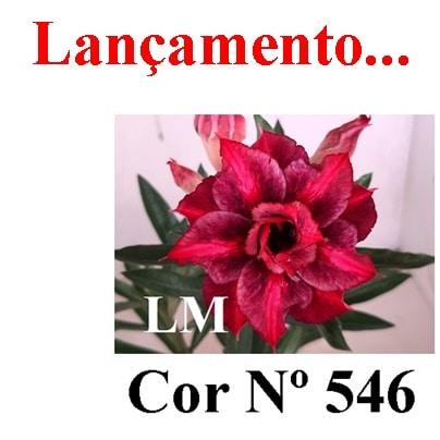Cor Nº 546 (2) LM Lançamento