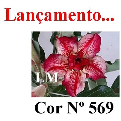 Cor Nº 569 (2) LM Lançamento