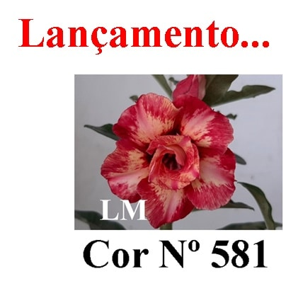 Cor Nº 581 (4) LM Lançamento