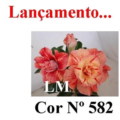 Cor Nº 582 (2) LM Lançamento
