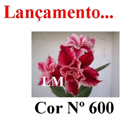 Cor Nº 600 (2) LM Lançamento