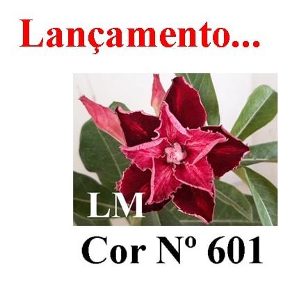 Cor Nº 601 LM Lançamento