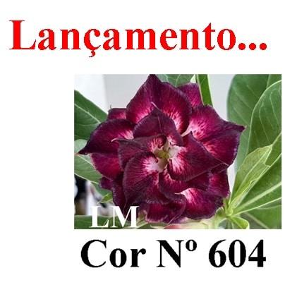Cor Nº 604 (2) LM Lançamento