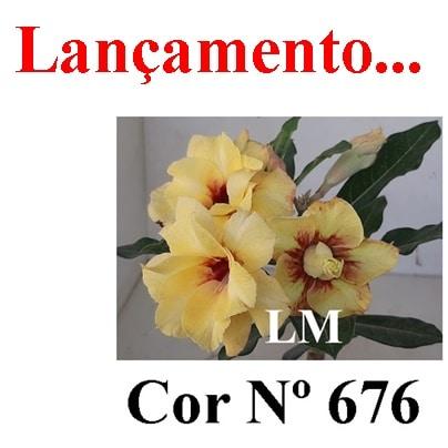 Cor Nº 676 (2) LM Lançamento