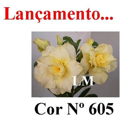 Cor Nº 605 (2) LM Lançamento
