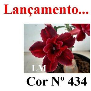 ENXERTO Nº 5997 – 20cm