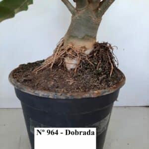 Planta Dobrada 964 – 55cm – 04 anos